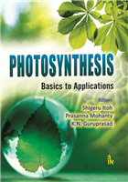 Photosynthesis: Basics to Applications, 1/e  by Shigeru Itoh